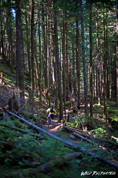 in_the_squamish_woods_wild_rec