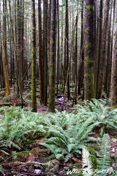 lisa_auf_squamish_trails_wild_rec