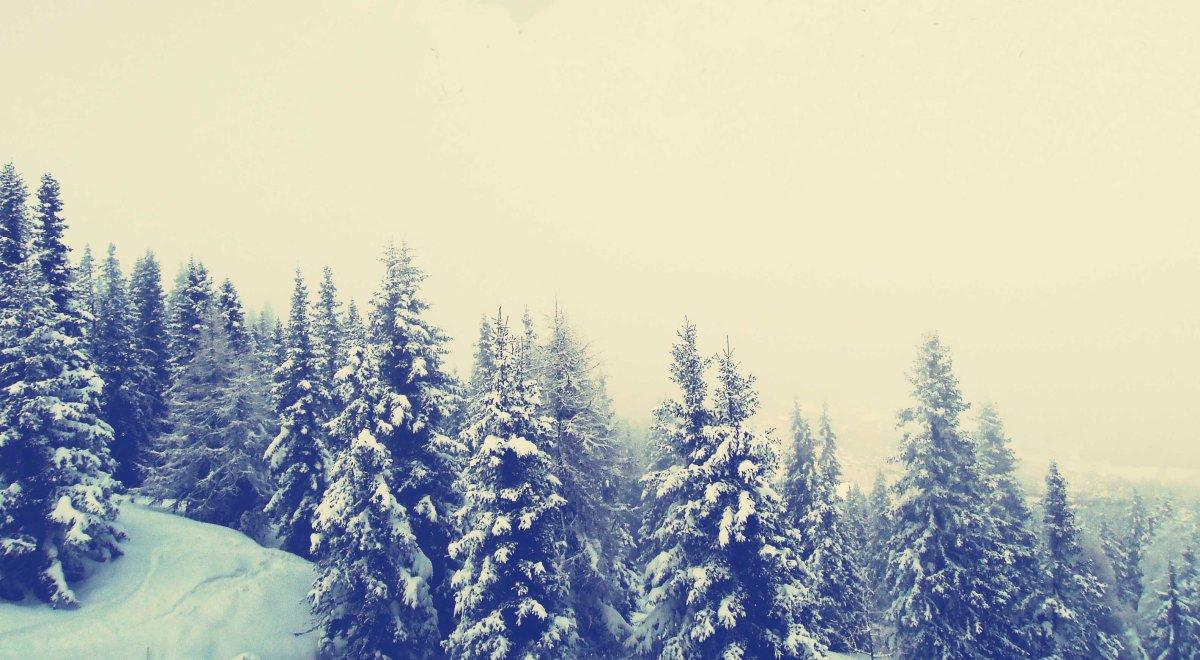 Wilde Bücher für den Winter