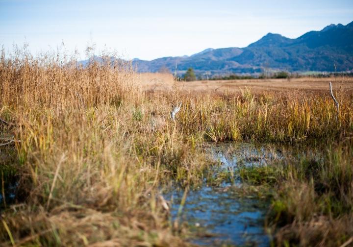Das Murnauer Moos – oder wie ich mit Blumenerde das Klima schützenkann